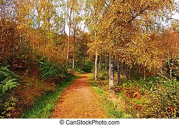 Autumn in the park, Scotland