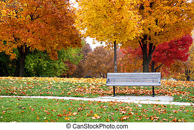 Single empty bench in the park with colorful tree background