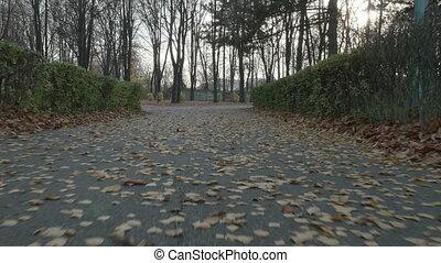 Autumn in the park - steadicam