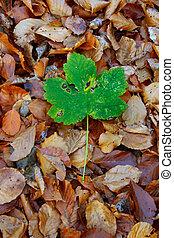 autumn individualist