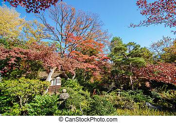 Japanese Garden with Maple, Tokyo, Japan