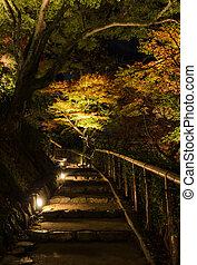 Autumn Japanese garden with maple trees at night