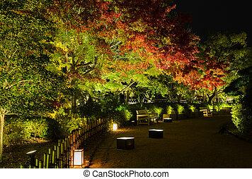 Autumn Japanese garden with maple trees light-up at night in Okayama, Japan