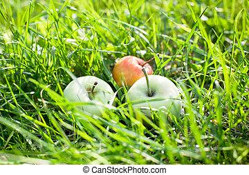 Autumn juicy organic apples in green garden grass