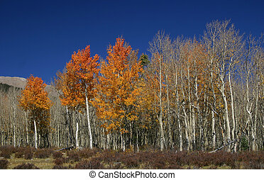 autumn kolorują