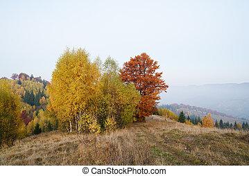 autumn krajina, kopec, kopyto