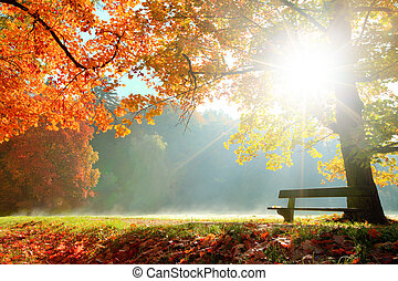 autumn krajobraz