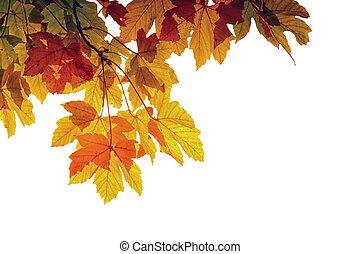Autumn Laeves
