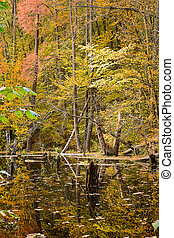 Autumn Lake in the forest
