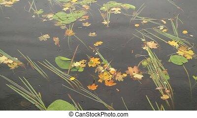 Autumn lake, rain