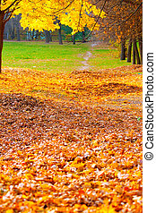 autumn alley with fallen leaves