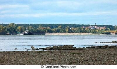 Autumn landscape. - Barge on the Ob river. Near Novosibirsk,...