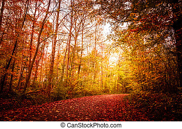 Autumn landscape - Beautiful autumn landscape in warm colors