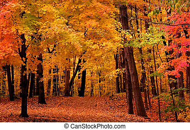 Autumn Landscape - Beautiful colored trees in a forest...