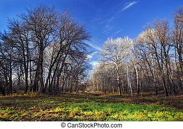 Autumn landscape.