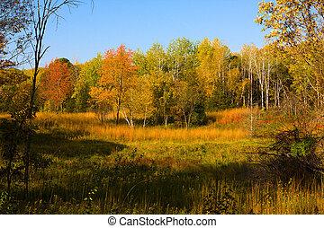 Autumn Landscape - Colorful Landscape from William O\'Brien...