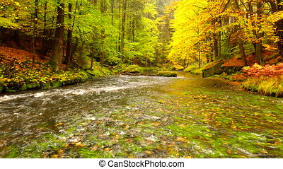 Autumn landscape, colorful leaves on trees, morning at river...