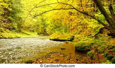 Autumn landscape, colorful leaves on trees, morning at river after rainy night. Colorful leaves. Autumn stream. Forest river. November scene.Fall morning river. Colors of river. Nature in autumn.