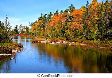Colorful tree reflection on the lake in Michigan