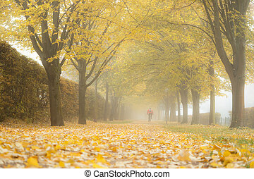 Autumn landscape- foggy autumn park alley