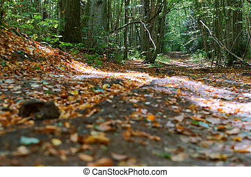autumn landscape, forest in autumn, fallen leaves on the ground
