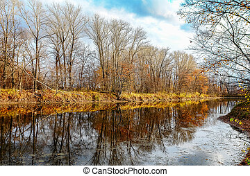 Forest lake in autumn forest