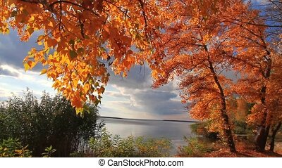 autumn landscape, golden trees on a sunny day on the banks of the river
