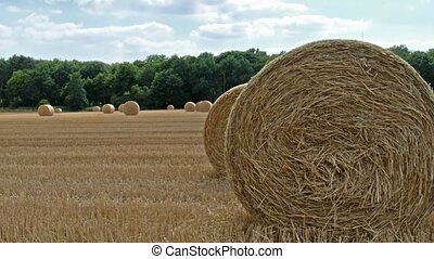 Autumn landscape. Harvest field with straw bale.
