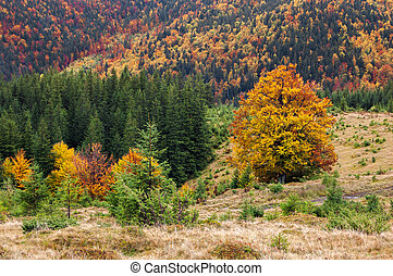 Autumn landscape in a mountain forest