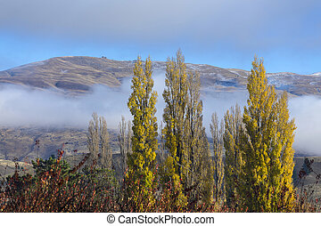 autumn landscape in Cromwell, Otago New Zealand