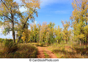Autumn landscape in forest