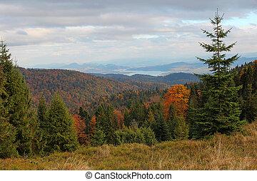 autumn landscape in Gorce mountains, Poland