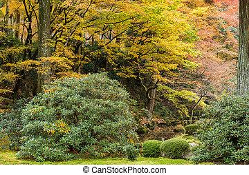 Autumn landscape in Japanese park