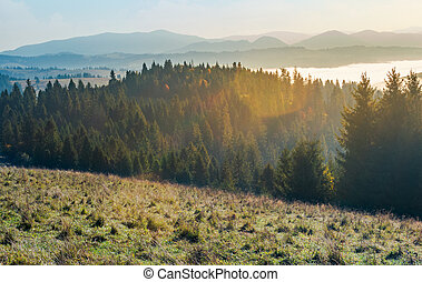 autumn landscape in mountains. spruce forest on a grassy...