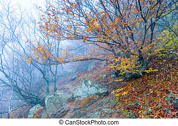 autumn landscape in the mountains, beautiful nature on a foggy day