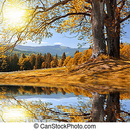 Autumn landscape in the national park Sumava - Czech ...