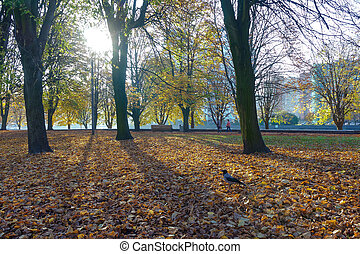 autumn landscape in the Park, walk in the Park in autumn