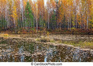 Autumn landscape. Lake of the Woods.