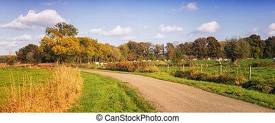 autumn landscape netherlands - Dutch landscape with road and...