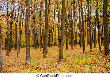 Autumn landscape of colorful trees stem in forest