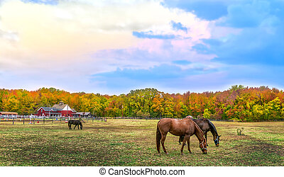Autumn landscape of horses grazing on a Maryland farm wth Fall colors