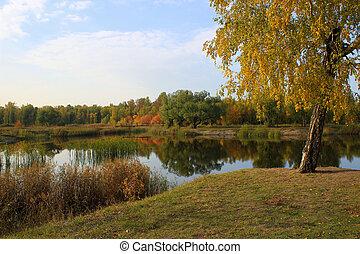 Autumn landscape: pond in the park - Autumn landscape: birch...