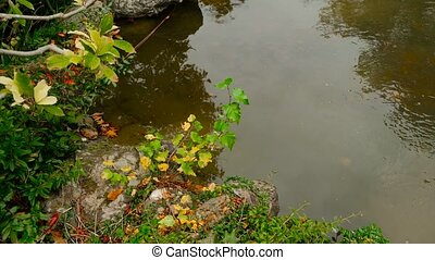 Autumn Landscape Pond Water With A Lol Of Copyspace....