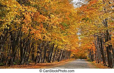 Road through orange colored autumn trees