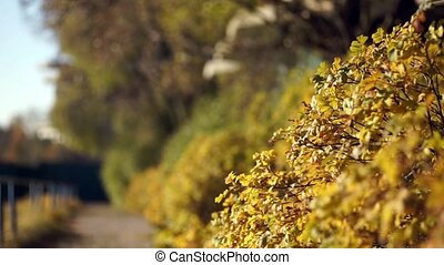 autumn landscape shallow depth of f