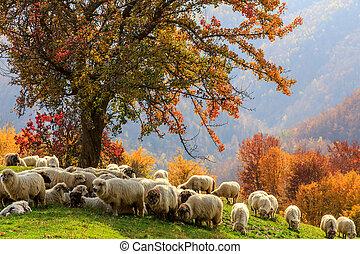 Autumn landscape, sheep, shepard dog