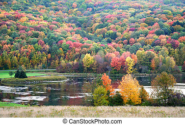 Autumn Landscape - Many colorful trees on the hills of...