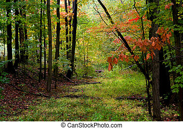 Autumn Landscape - Bright colored trees and plants in...