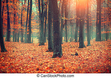 Autumn landscape, trees and leaves. Fall scene