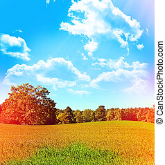 Trees on a background of blue sky with clouds